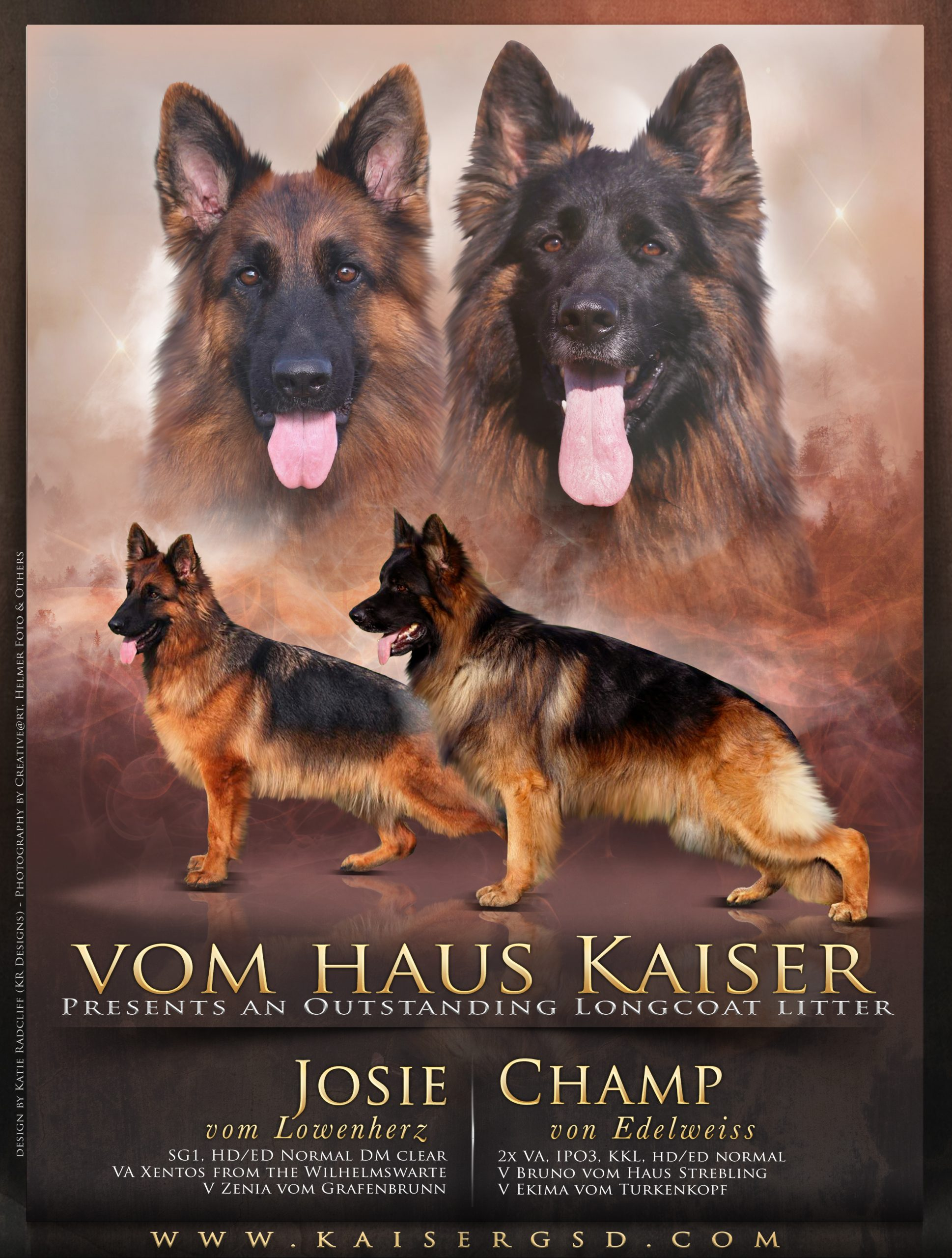 An award poster for Kaiser German Shepherd 'Vom Haus Kaiser'